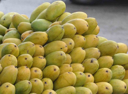Image result for Dussehri Mangoes lucknow